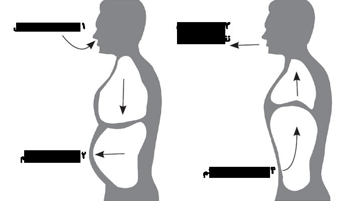 چگونه با تنفسِ شکمی حال بهتری داشته باشیم و بیشتر زندگی کنیم؟ (+روش تمرین و تثبیت)